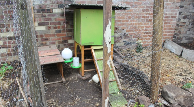 HOW TO BUILD A CHICKEN COOP FROM SCRATCH